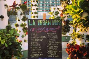 What's growing at LA Urban Farms